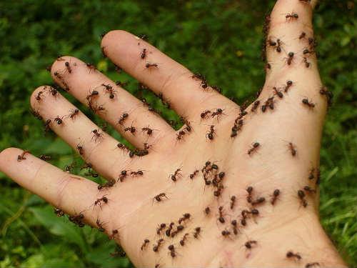 ant bite