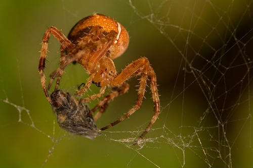 are spiders dangerous