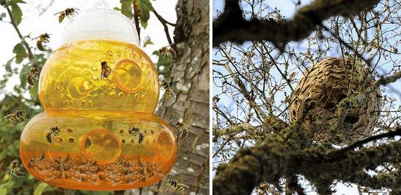 asian giant hornet prevention traps