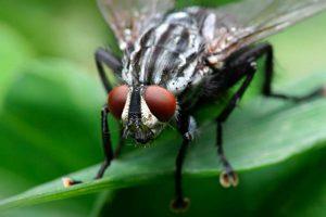 homemade tricks to scare away flies
