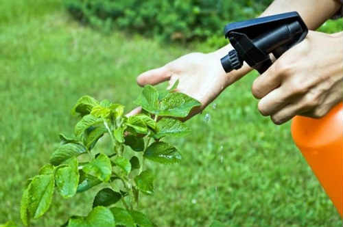 how to eliminate beetles