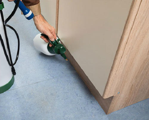 how to eliminate woodworm