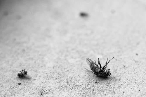 more tricks to kill flies
