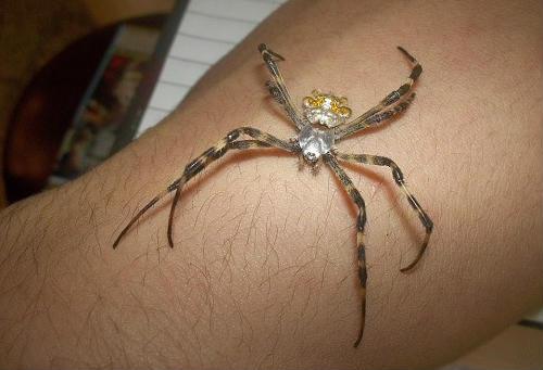 spider sting