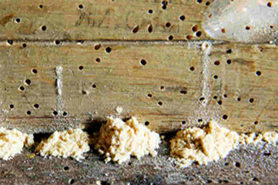 termites at home