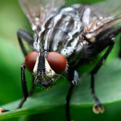 tricks to scare away flies