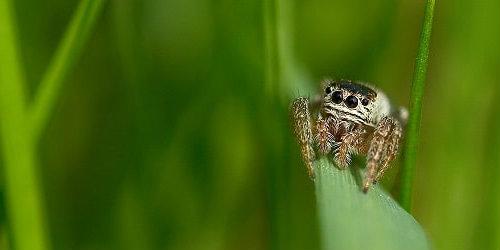 vagbond spider