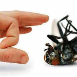 6 Simple steps to eliminate flies