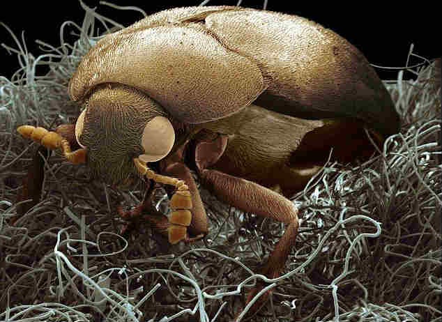 Avoid beetles on clothes