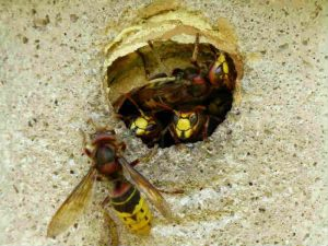 Effective techniques to kill wasps