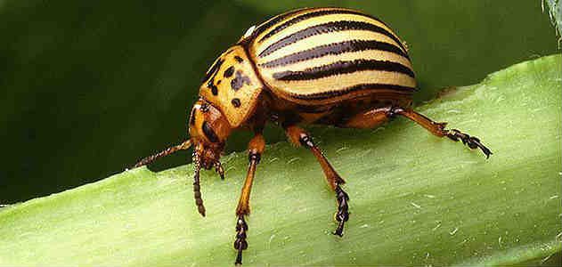 Everything you need to know about beetles