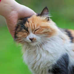 Remove ticks from cats with simple tricks
