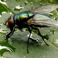Season with more flies