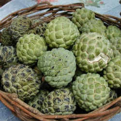 The cherimoya eliminates the lice. We tell you how