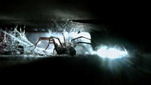 The places where spiders usually hide