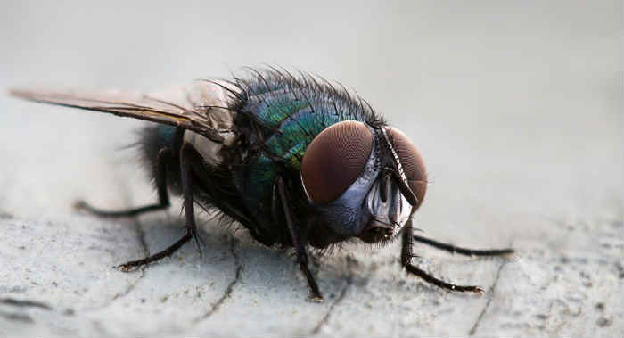 The season where there are more flies