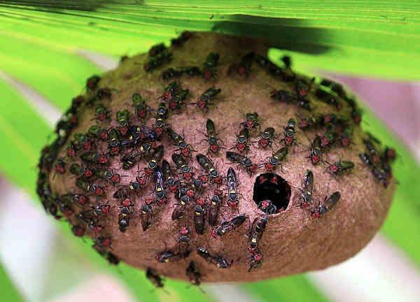 avoid wasp stings