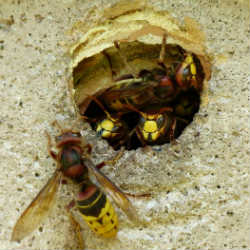 best techniques to kill wasps