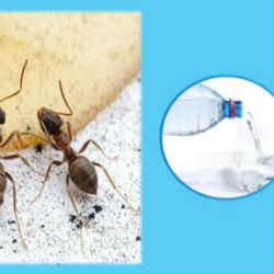 homemade tricks to avoid ants