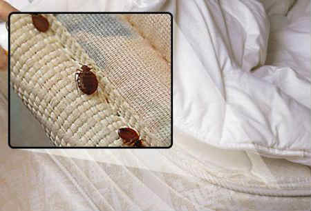how i know if there are bed bugs at home