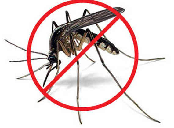 how to avoid tiger mosquito bite