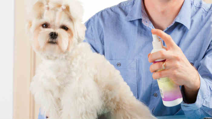 how to kill fleas in dogs