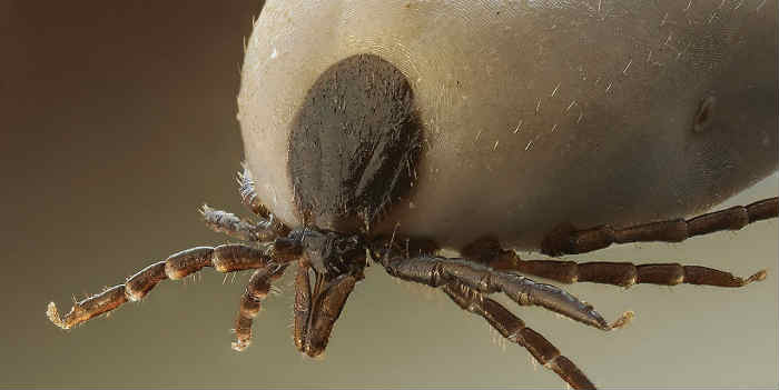 mites in our home