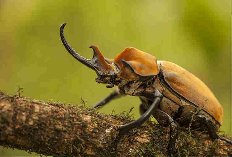 places where beetles tend to hide2