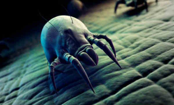 what are the positive things of the mites