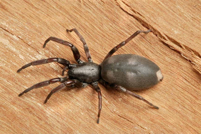 How to avoid an invasion of spiders with natural treatments2